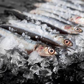 fish fresh huse termoizolante